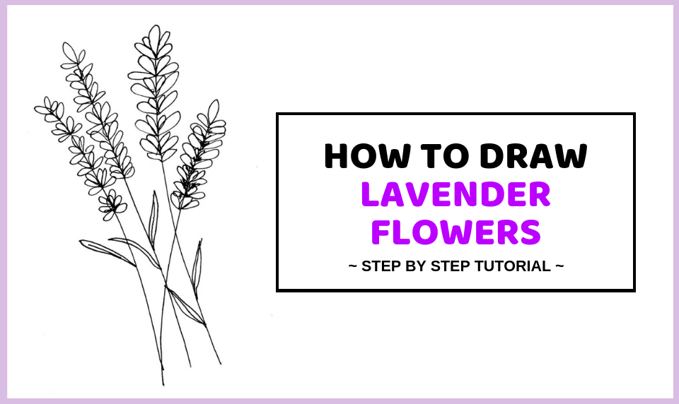 How To Draw Lavender Flowers Easy Step By Step Guide